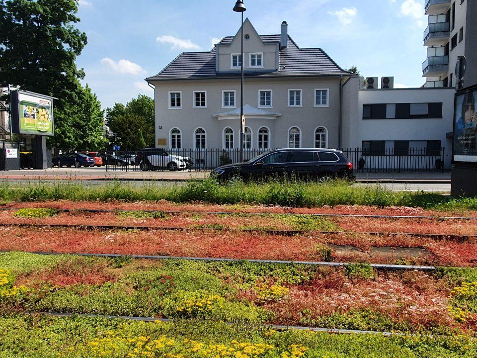 Begrünte Bahntrasse mit Schienen zwischen blühenden Bodendeckern. Im Hintergrund fährt ein Auto über einen Straße vor einem Haus.